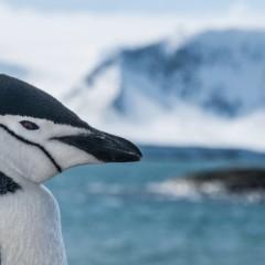 Wśród lodowców Antarktyki | Piotr Horzela | Z Gildią Tam i z Powrotem | 23 kwietnia 2015