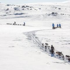 Psim zaprzęgiem przez arktyczną tundrę / 26 listopad 2015