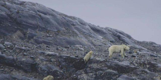 Spitsbergen z Łowcami Wrażeń