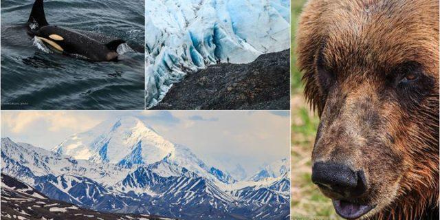 Jak przemierzyć 2 tyś. kilometrów przez tajgę i tundrę Alaski