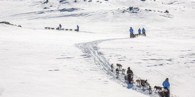 Psim zaprzęgiem przez arktyczną tundrę