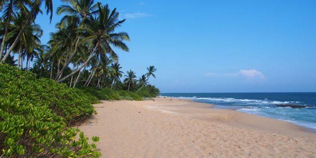 Gdzie zmysły poniosą, czyli Sri Lanka w drodze… | Z cyklu z Gildią Tam i z Powrotem |