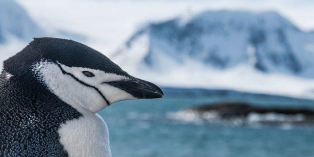 Wśród lodowców Antarktyki | Piotr Horzela | Z Gildią Tam i z Powrotem |