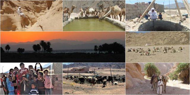Beduini z Synaju / Free