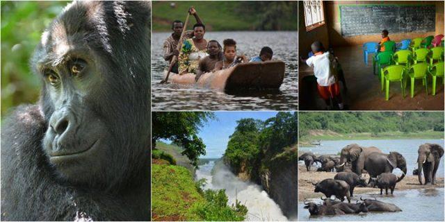 Prawdziwa Uganda – górskie goryle we mgle / Free