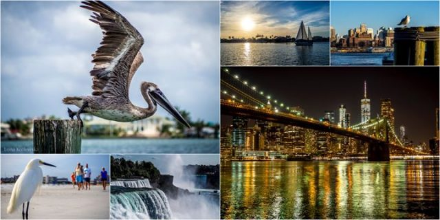 Floryda, Nowy Jork i Massachusetts w poszukiwaniu ptaków / Free