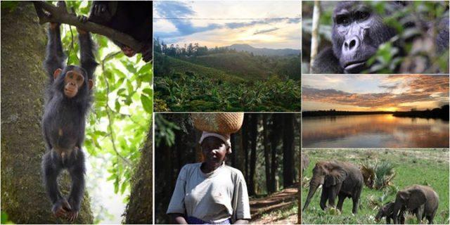 Uganda – blondynka solo w Perle Afryki / Free