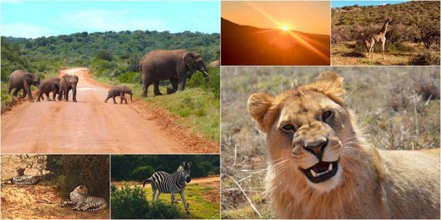Wolontariat w RPA – podróż po afrykańskim buszu / Free
